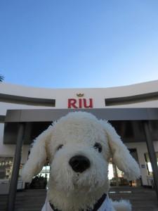 Mimo-im-Riu-Palace-Tenerife_12-225x300