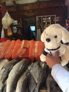 Mimo-auf-dem-Fischmarkt-von-Puerto-Montt_-225x300