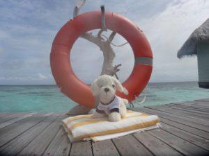 Mimo_Malediven3-300x225