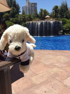 Pool-vom-Hyatt-Hotel_-225x300